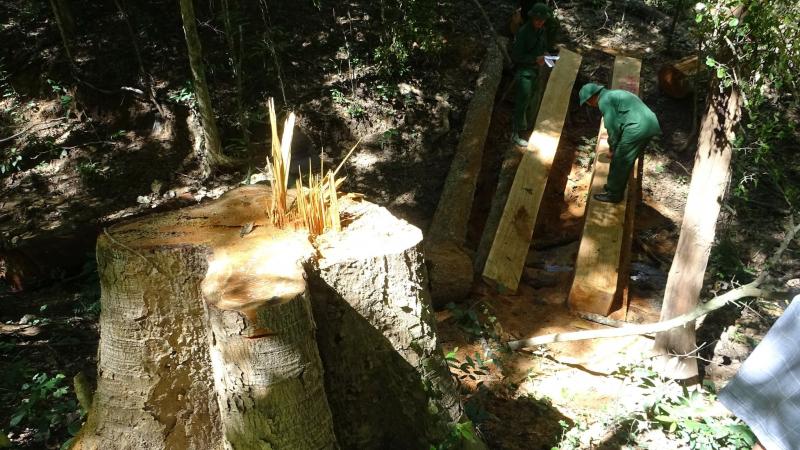 Thêm một cán bộ kiểm lâm bị bắt trong vụ phá rừng Ea Sô -0
